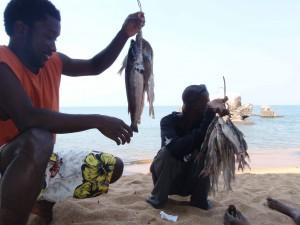 sälja fisk