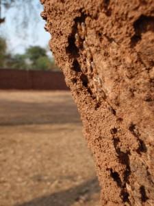 termiter på träd