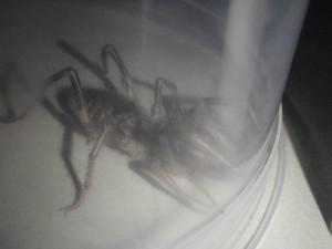 Spindel nr 2