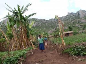 Bananträd till vänster