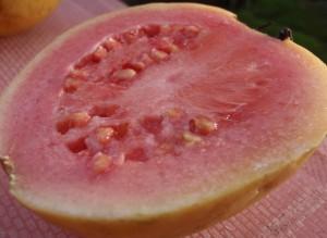 Guava closeup